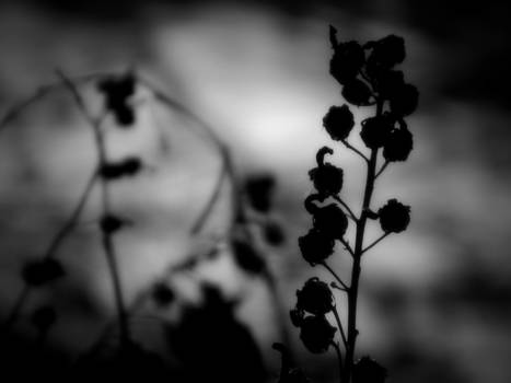 Silhouette of the Plants