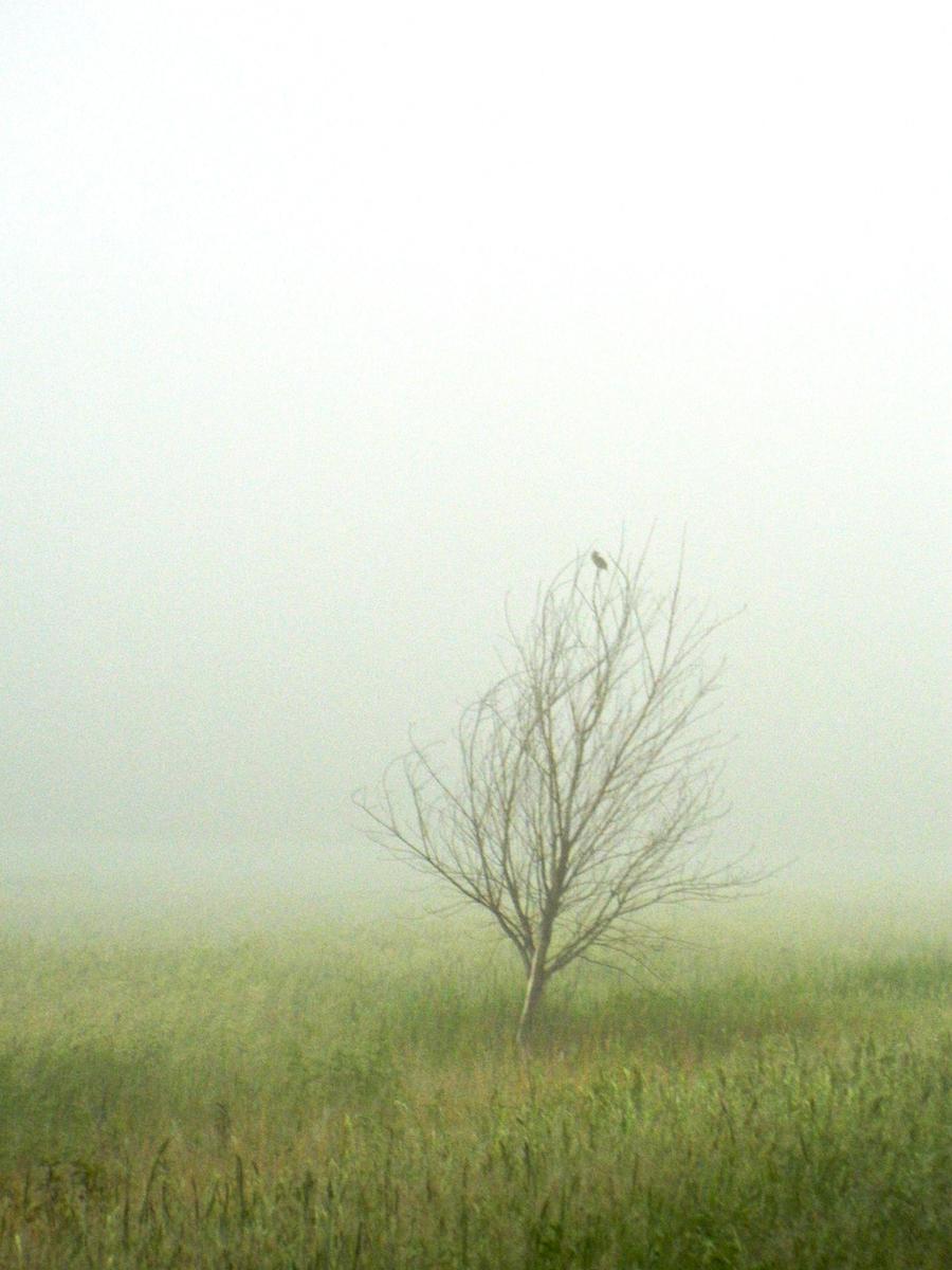 Silence of the Bird