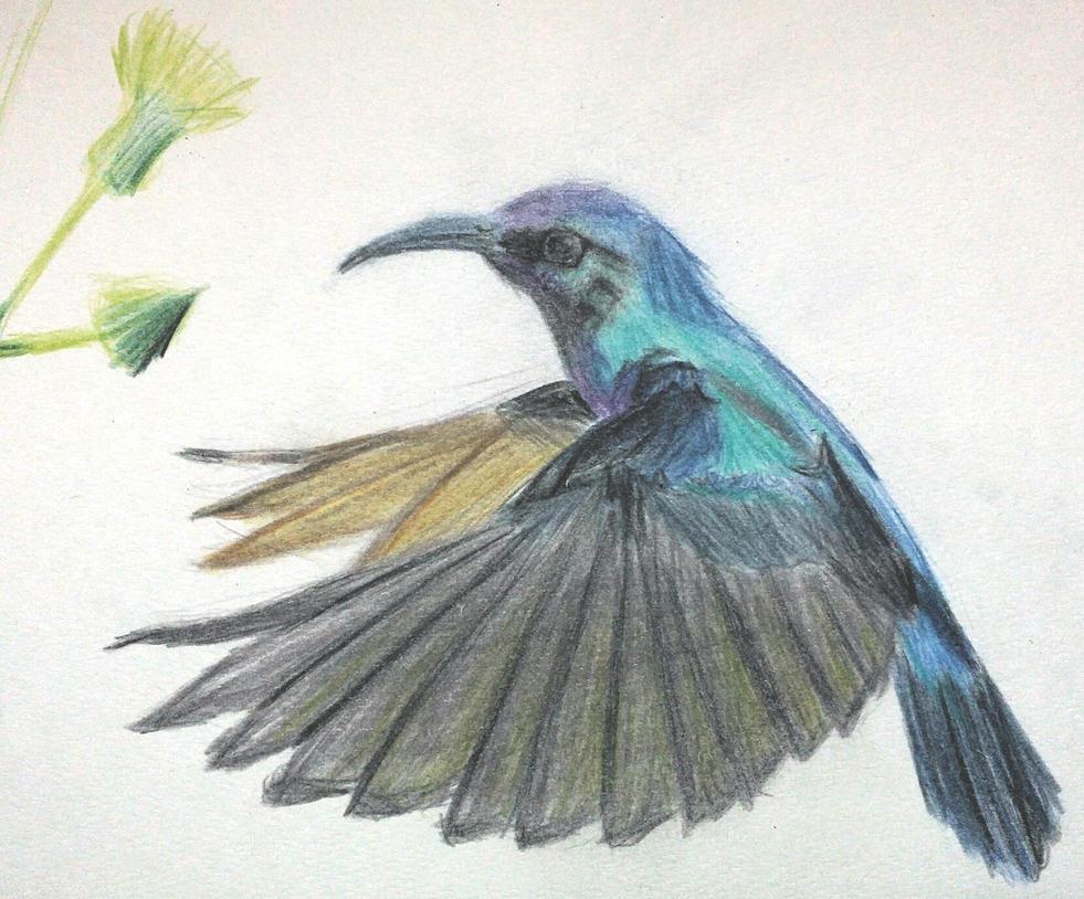 Hummingbird by GinJuice