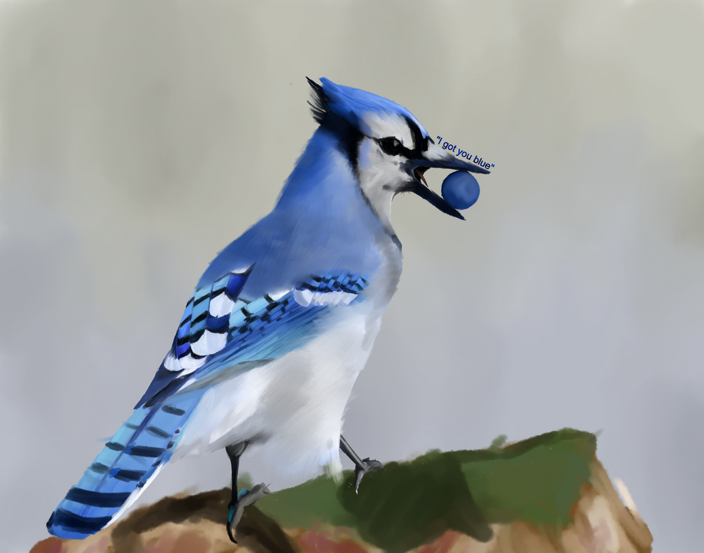 Bluejay by GinJuice