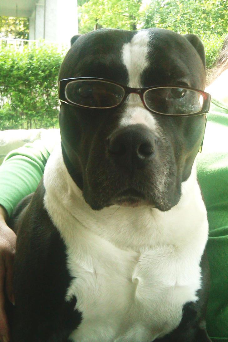 Rocky in Glasses by mediodia91