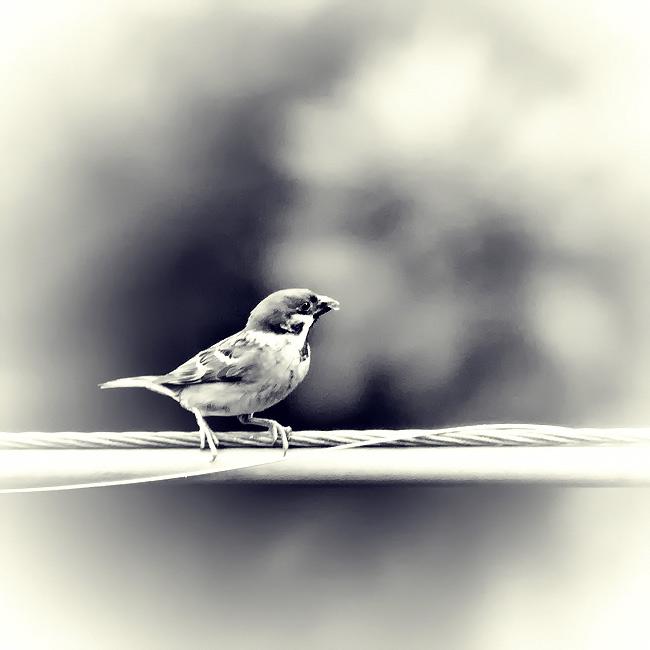 bird by ucilito