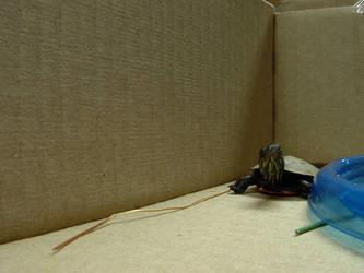 turtle 1 by einlanzer