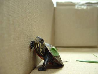 turtle 3 by einlanzer