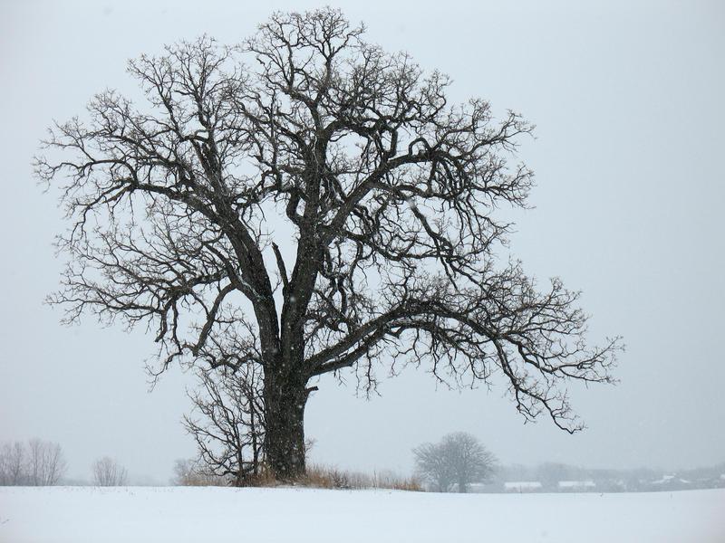 Winter Stock 1 by AvalonSkyStock