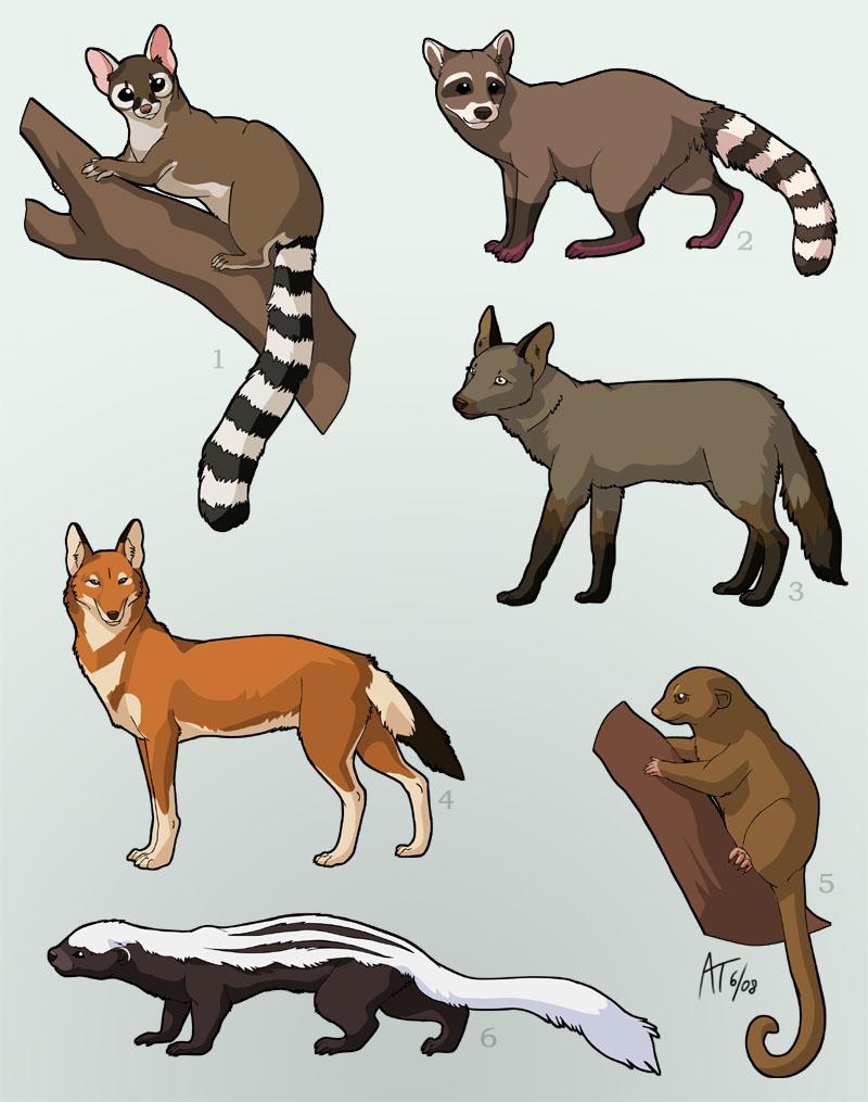 Carnivorous Animals Drawings