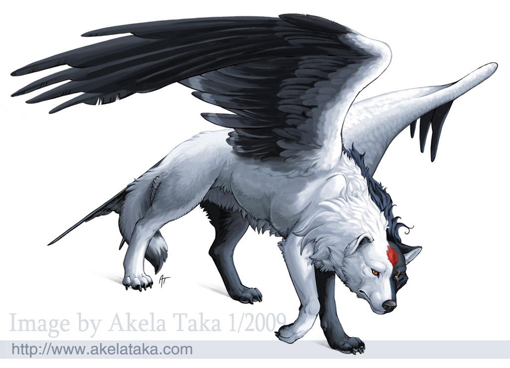 Magic Wolf Photo Akela Taka
