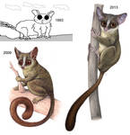 The Galago Throughout the Years