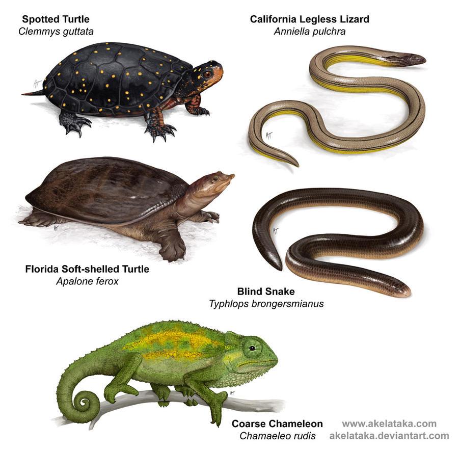 Reptiles by akelataka