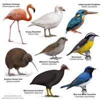 Birds by akelataka