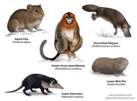 Mammals by akelataka