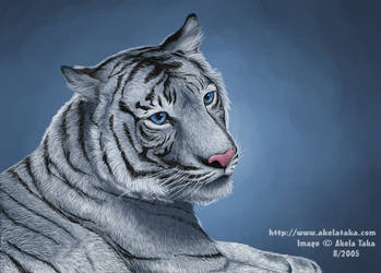 White Tiger by akelataka