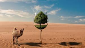 Desert glass