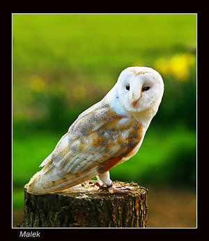 Mr wise owl