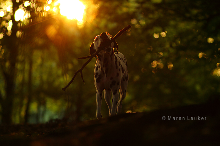 sunlight by Maaira