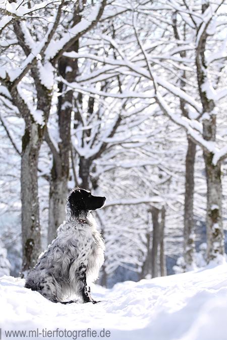 .winter. by Maaira