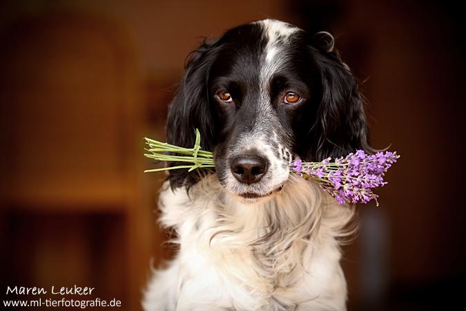 lavender by Maaira