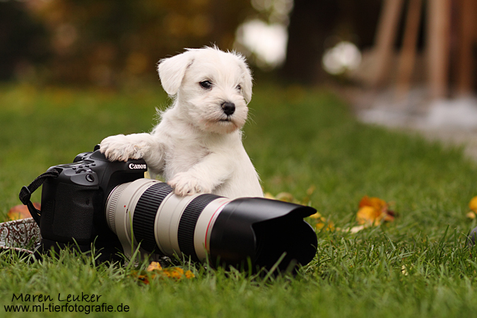 puppy by Maaira