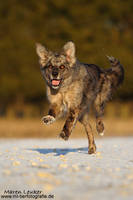 run! by Maaira
