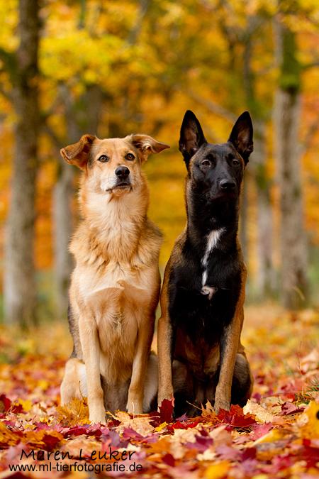 best friends by Maaira