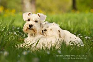 puppy love by Maaira