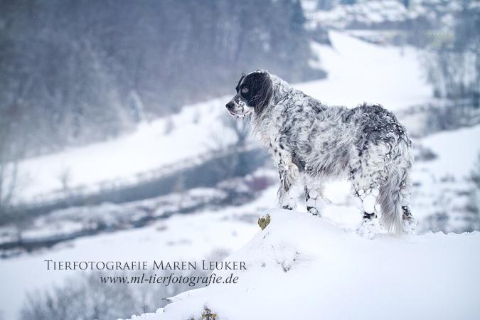Snow Queen I by Maaira