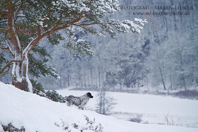 Snow Queen II by Maaira