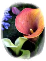 Flower market 3 by rimolyne