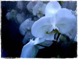 Flower market 4 by rimolyne