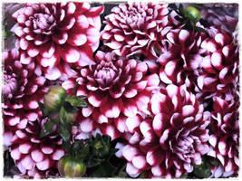 Flower market 5 by rimolyne