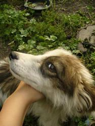 Puppy 2 by rimolyne
