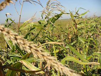 Crops by rimolyne