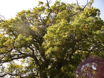 Big tree by rimolyne