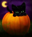 Kitten in a Pumpkin Patch