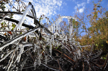 ice and nature by Combative