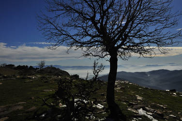 A tree at top of the mauntain by Combative
