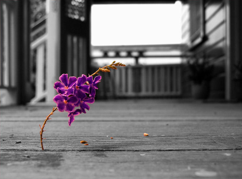 Purple by Genetrix205