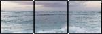 f2u beach divider by NashobaPaws