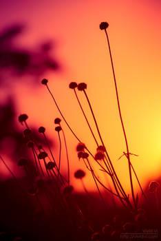 Summer Feelings by VividVi