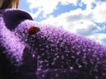 Colors of the world Ladybug