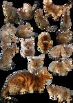 Free cat stock