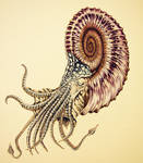 Spiral nautiloid, color image
