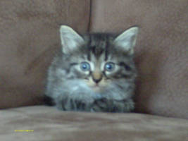 My kitty Miyu