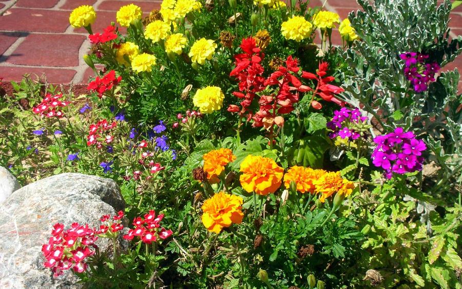 Sue's Garden by edgyqueen