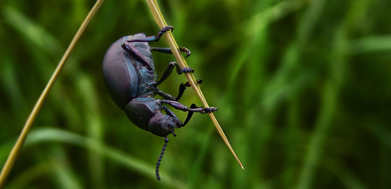 Big bug by WTek79