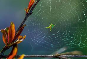 Green Spider by WTek79