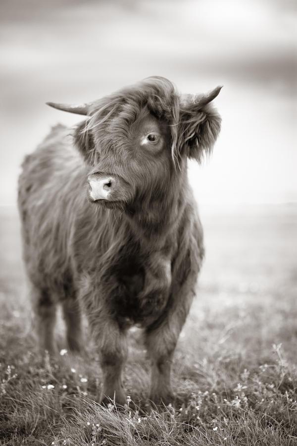 Une Vache by WTek79