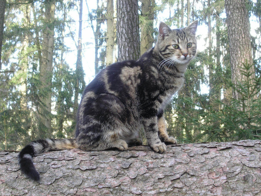 Lucyndaria's Profile Picture
