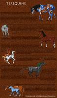 Terequine Breedsheet by DragonPud