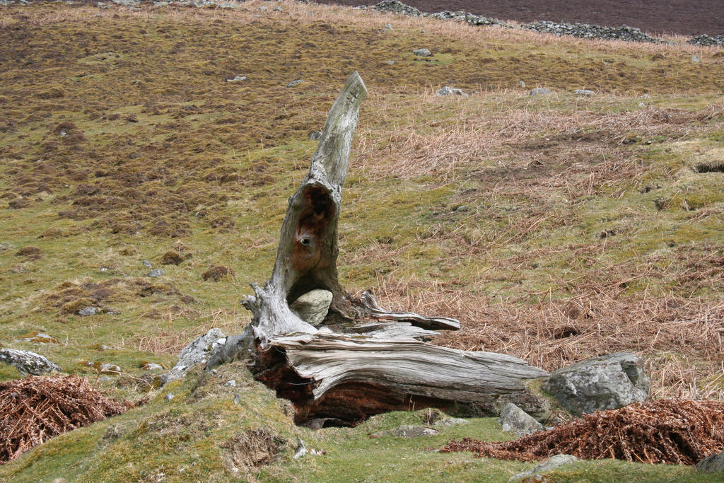 A rock in a old tree stump...
